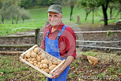 Happy farmer show his organic potato