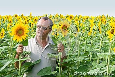 Farmer on a sun flower field