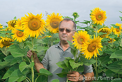 Farmer on a sunflower field