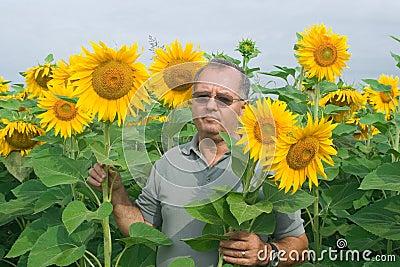 Farmer on a sunflower field