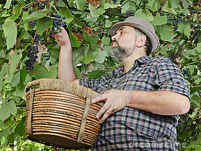 Farmer in suspended vineyard