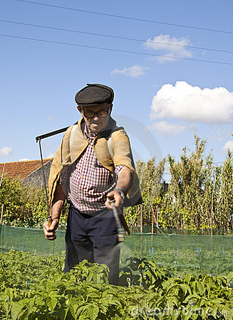 Farmer tending potatoes