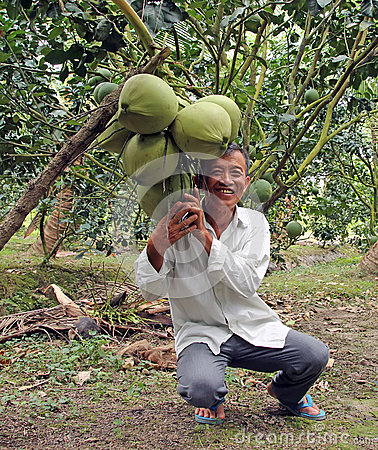 Farmer with tropical Fruit Editorial Stock Image