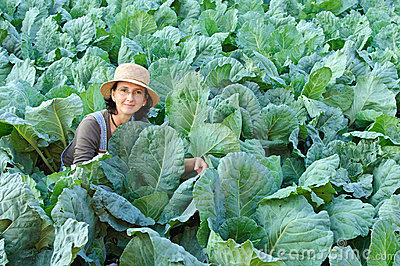 Farmer cabbage field