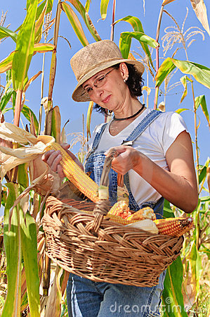 Farmer woman maize basket