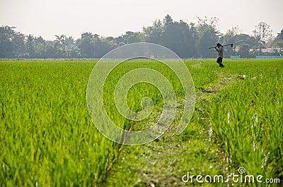Farmer work in the green