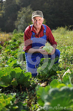 Farmer working at field