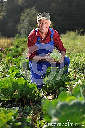 Farmer working at field