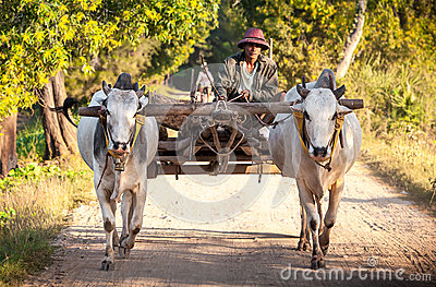 Farmer working in the field Editorial Stock Photo