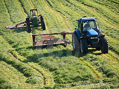 Farmers Cutting Hay with Tractors Editorial Stock Image