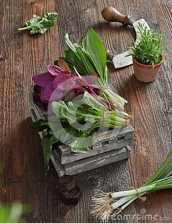 Free Farmers`s Market Herb Leafs Royalty Free Stock Photos - 142777998