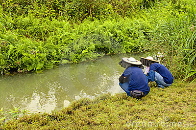 Farmers at Wetland