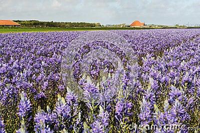 Farmhouse at Dutch island Texel