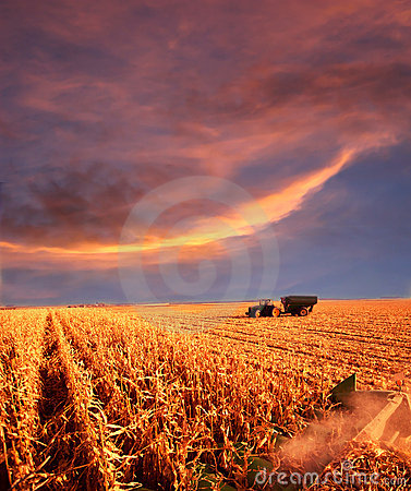 Free Farming At Sunset Royalty Free Stock Images - 13279699