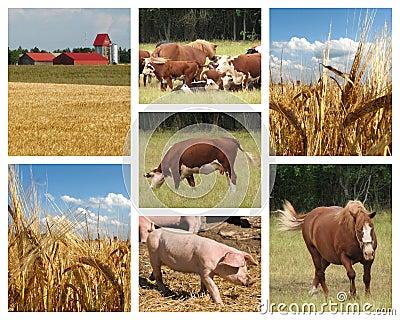 Farming images