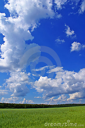 Farming Field Stock Image - Image: 12800191