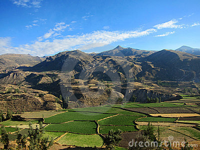 Farming terraces in Peru