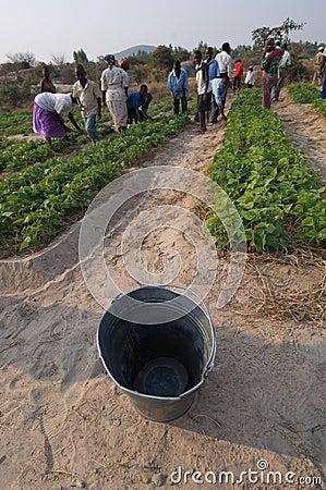Farming in Zimbabwe Editorial Photo