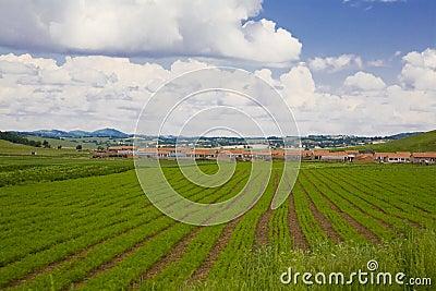 Farmland  and  cloud