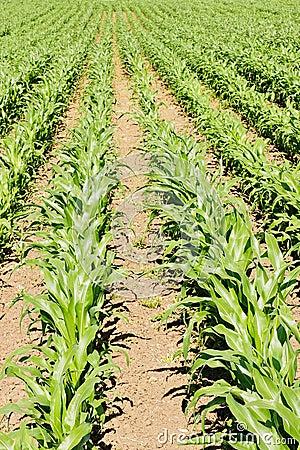 Farmland Crops
