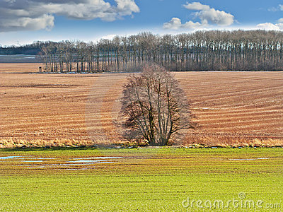 Farmland in early spring - panorama
