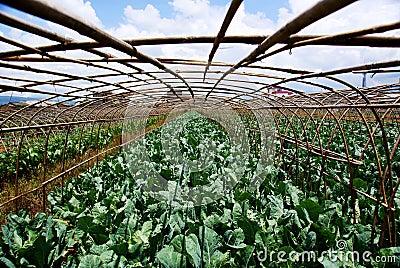 Farmland farming