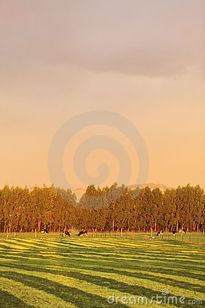 Free Farmland In Late Afternoon Light. Royalty Free Stock Photo - 14104235