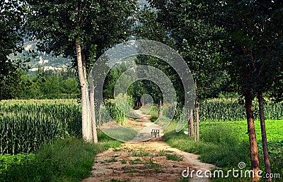 farmland  lined path