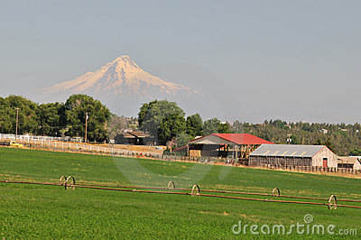 Farmland and Mt. Hood