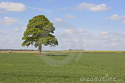 Farmland with tree