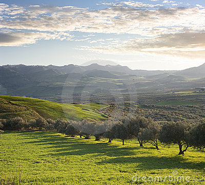 Free Farmland With Olive Trees At Sunset Royalty Free Stock Photos - 14646758