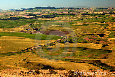 Farms Yellow Green Fields Palouse Washington