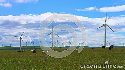 Farmy wiatrowe i filmy wideo na temat bydÅ'a na użytkach zielonych Huitengxile, Mongolia wewnÄ™trzna, Chiny zdjęcie wideo