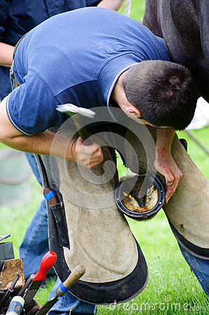 Free Farrier Replacing Horse Shoe Stock Photo - 70497010