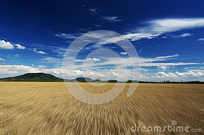 Fast motion over the wheat field in summer time Stock Photo
