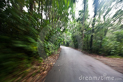 Fast movement in a forest road