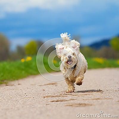 Fast running Dog