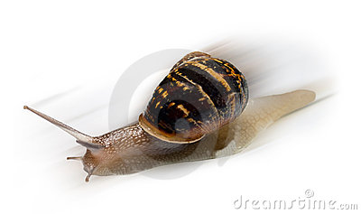 Fast Snail with motion Blur