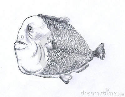 Fat piranha fish