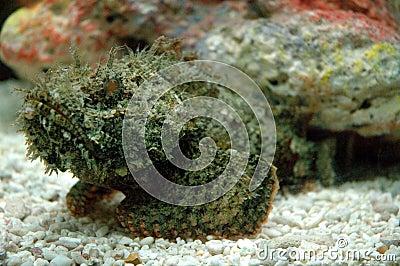 Fatal sea creatures