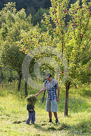 Father and child in apple orchard