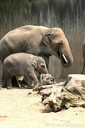 Father and child elephant