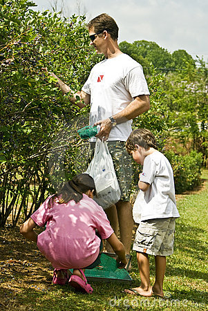 Father/Children Picking Fruit