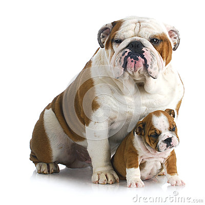 Father and son dogs