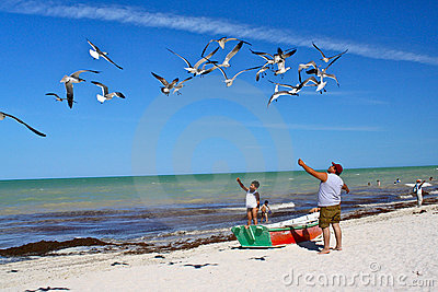 Father and son feeding seagulls on mexican beach Editorial Image