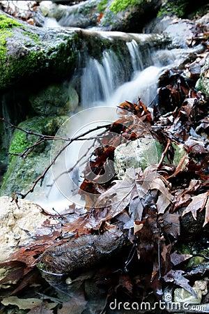 Faule Blätter