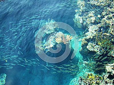 Fauna del mar