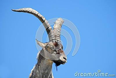 Fauna Gredos-Avila-España