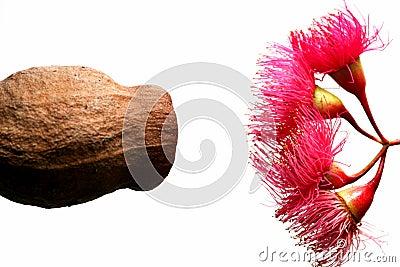 Fauna nativa australiana