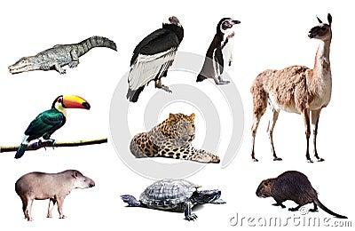 Fauna of South America